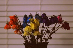 Flowers (Tracy Christina) Tags: flowers colorful blinds