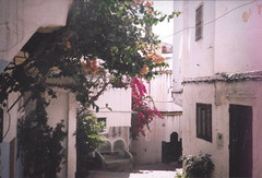 (gabriel_90sflav) Tags: kasbah tanger tangier maroc morocco flowers summer autumn vibe analogue analogic lofi film 35mm fujifilm rollei xf 35 90s vapor vaporwave esthetic aesthetic art tiny street rad pastel indie lomo skylight pink rose love medina plants natural