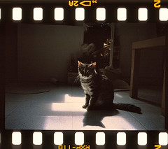 (joselai) Tags: leica light cute film animals cat studio kitten snap fujifilm positive fujichrome provia minilux 400x rxp