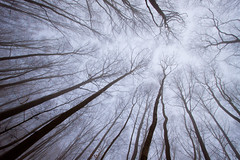 neural network (galuppi) Tags: wood trees misty surrey beech explorefrontpage