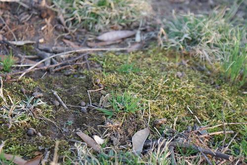 Tiny ecosystems.