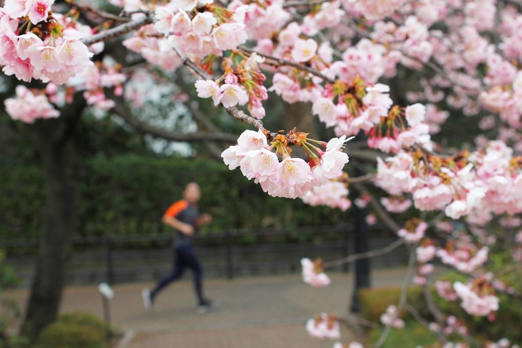 Spring has come (1)