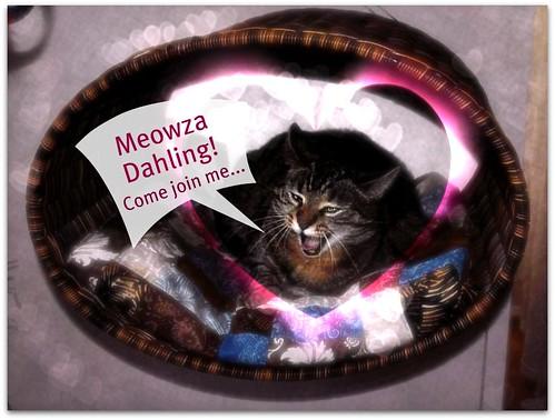 Weekend Cat Blogging #304