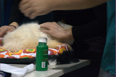 DSC_0231 (Francesco_Fontana) Tags: cat kat chat gato katze mace  macska gatto  con kot gat koka kedi kass katt kissa kttur maka kucing pusa mo   kat     pisic  qattus   kais