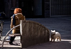 Dog (Hanjosan) Tags: street portrait woman dog girl co