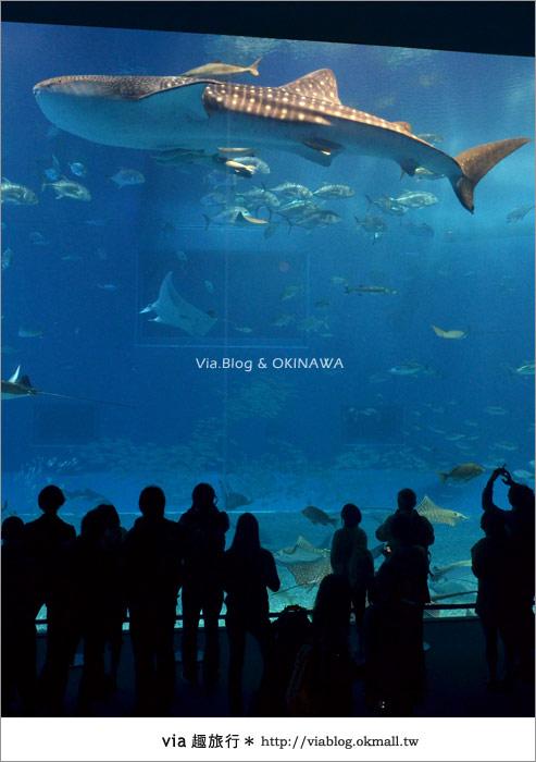 【沖繩景點】美麗海水族館~帶你欣賞美麗又浪漫的海底世界!23