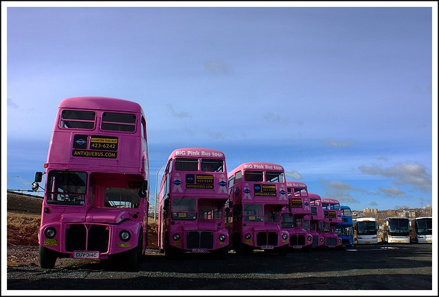 Little Pink Busses