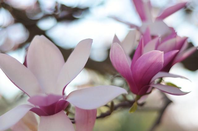 spring colors week -- pink