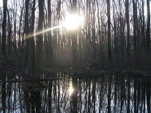 the sun in the woods