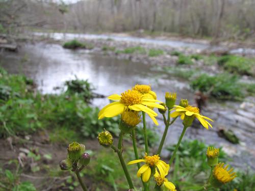 NC Wildflowers-11