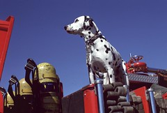 LAFD FS 103 Fire Dog September 1978