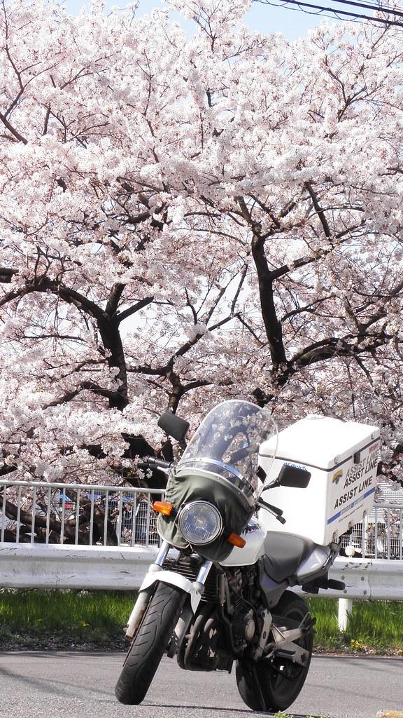 バイク便 桜 所沢市 2011-04-12 020