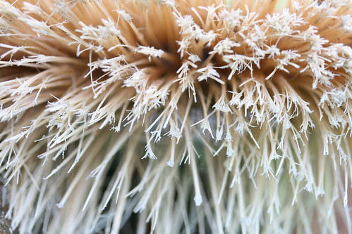 Broom Bristles: Abstract View
