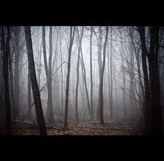 184/365 Misterioso [Explored]