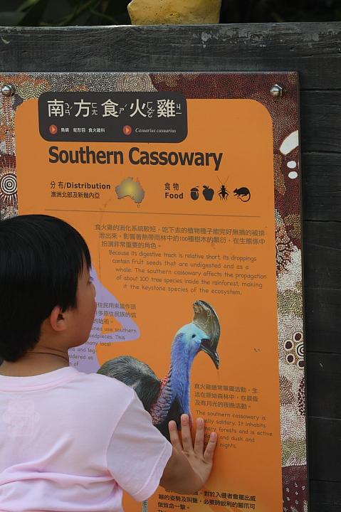 木柵動物園(南方食火雞)048