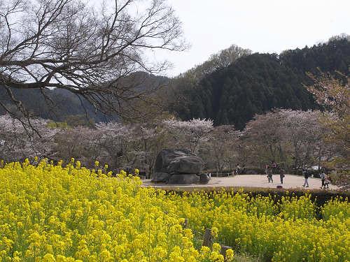 実験「春の飛鳥で何種類の花が見られるか?」@明日香村
