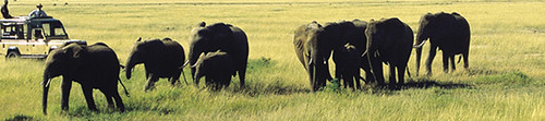 Africa Wildlife Safaris Kenya Tanzania, Wildlife Lodge Camping Safaris Kenya Tanzania,Maasai Mara Serengeti Tours Beach Holidays Mountain climbing Africa.
