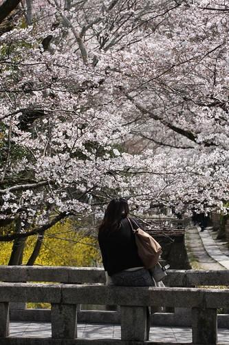 ひとり京都で・・・ / Traveling alone