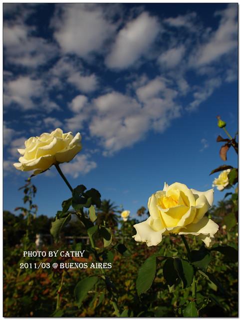 rose plaza-18