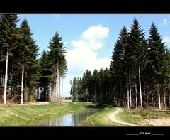 Dans 8 mois c'est Noël (Yolanda Miel) Tags: christmas france forest canon rivière weinachten noël wald lorraine arbre baum forêt sapin moselle