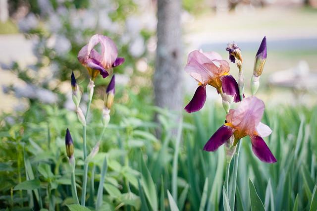 FlowerGarden2011-7