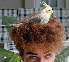 Ninho de passarinho (365 Dias que Acalmaram o Mundo) Tags: ninho passarinho pssaro cabelo pensamento resumo preocupao 365dias ninhodepassarinho boasnotcias