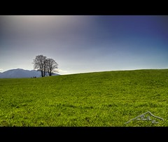 Himmel und Erde (mcPhotoArts) Tags: sky copyright tree nature germany landscape bayern deutschland bavaria countryside spring hill natur meadow wiese himmel landschaft baum hdr garmischpartenkirchen frhling hgel uffing photomatix sigma1770mm2845dcmacro phtoshopcs4 canoneos550d gapaland ffgapashow