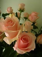 Mother' s Day Ecuador roses