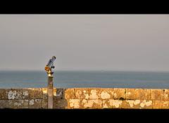 longue vue 2 (AO-photos) Tags: sea mer france nikon view vue hdr leder longuevue d5000 photoengine oloneo