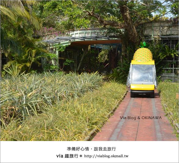 【via的沖繩旅誌】名護鳳梨公園~可愛又香甜的鳳梨樂園!13
