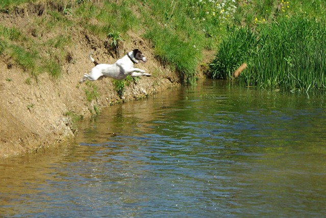 Leaping into the Stream