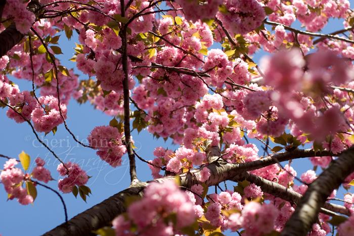 IMG_6054_blossoms.jpg
