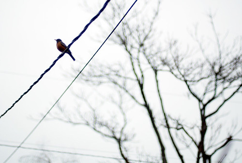 bird on wire