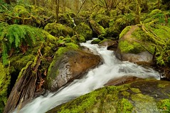 Some creek I found near westfir oregon! (JSB PHOTOGRAPHS) Tags: road water oregon creek forest moss stream scenic service 19 oakridge westfir aufderheide robert byway dsc01422241
