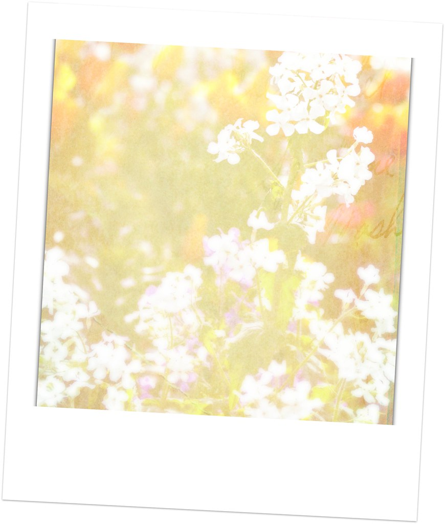 May Flowers Polaroid