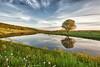 Late Day Reflection (Photography by Steven Frudak) Tags: ny reflection ithaca cloverhill burdett stevenfrudak