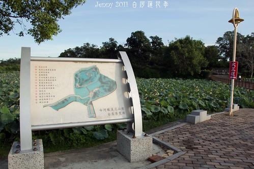 20110620白河蓮花季-5608