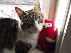 Cooley and penguin.. (Ms Kat) Tags: cat penguin cooley mrowrr