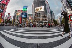 Holy Shiiii...buya, Tokoy is huge!; Tokyo, Japan (erik-peterson) Tags: 2016 d3s erikpeterson japan tokyo shibuya crowd crosswalk