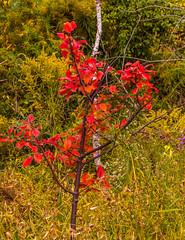 Along The East Point Trail (vernonbone) Tags: 1855kitlens 2016 autumn d3200 eastpoint eastpointpark lens ontario september colors hicking landscape nikon outside stuff