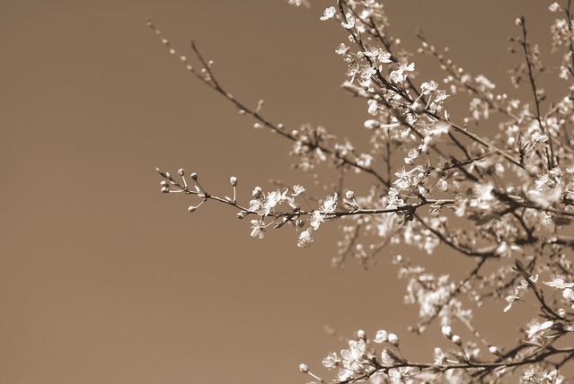 Mar 19