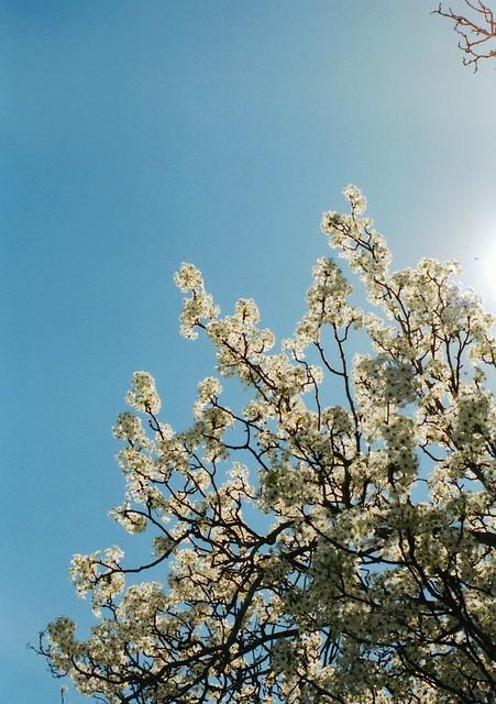 film, blooms, sun
