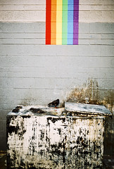 Gutter Rainbow (Design.Her) Tags: newmexico bird film beauty 35mm rainbow mural downtown minolta pigeon albuquerque ugly fujifilm 135 filth greasetrap minoltaxe7 fujipro800z designher ernestdoty