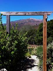 Window to the Big Sur hillside (VoxLive) Tags: california vacation apple big bigsur sanjose headquarters carmel pebblebeach sur canneryrow carmelca