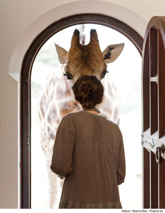 giraffe-manor-window-580cs030811-1299623203
