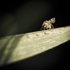 Bzz? (Mathieu Calvet) Tags: france macro nature fly pentax lot 100mm ppg fa mouche k5 photogallery midipyrénées justpentax pentaxart pentaxk5 pentaxfa100mmf28macro