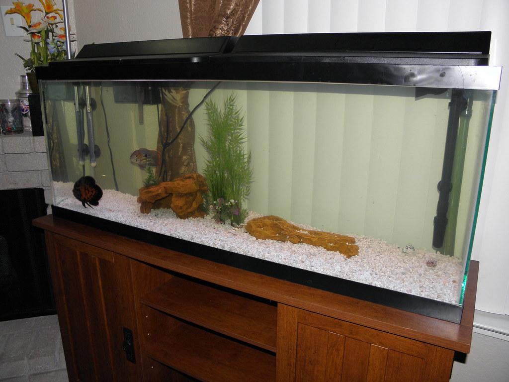 55 Gal Fish Tank