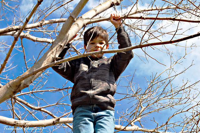 Jacob in tree