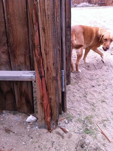 Poor gate :(