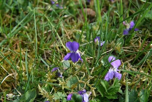 Violets?